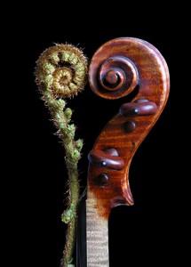 Violinorum Förderprogramm